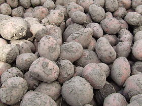 Potatoes bunch.jpg