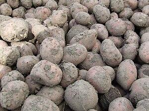 Potatoes bunch.jpg