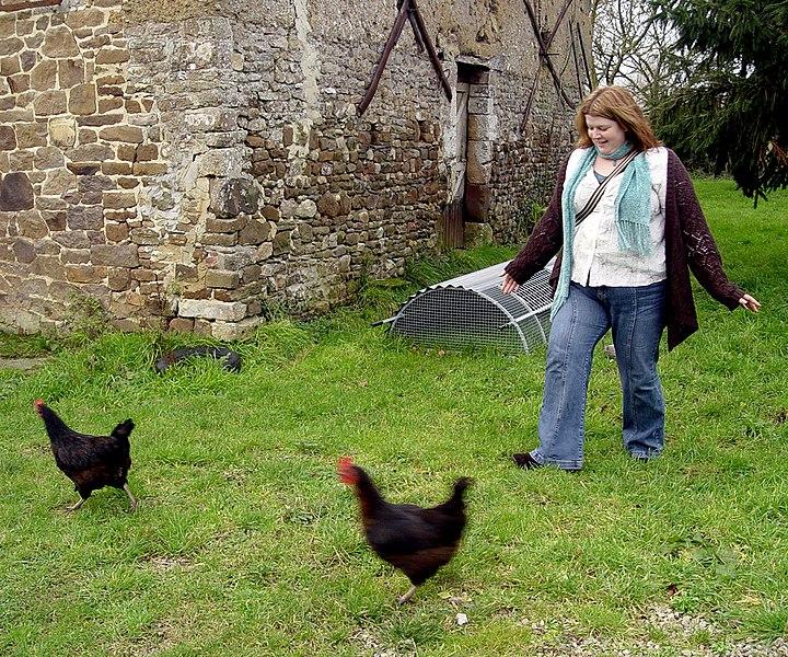Poultry herding