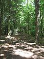 Powdermill Wood - geograph.org.uk - 1355533.jpg