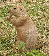 fauna of saskatchewan wikipedia