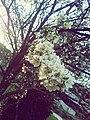 Proljece -) - panoramio.jpg