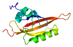 Protein ARNT PDB 1x0o.png
