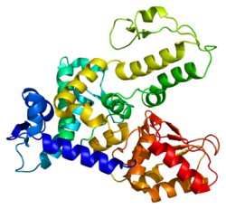 Protein WWP1 PDB 1nd7.png