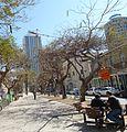 Purim Monring, Rothschild Boulevard P1130238.JPG