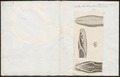 Python bivittatus - kop - 1837 - Print - Iconographia Zoologica - Special Collections University of Amsterdam - UBA01 IZ11800216.tif