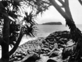 Queensland State Archives 1936 Peep at Cook Island from Fingal Point overlooking Giants Causeway c 1934.png
