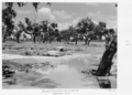 Queensland State Archives 5286 Bulloo River Annabranch Crossing Adavale District January 1955.png