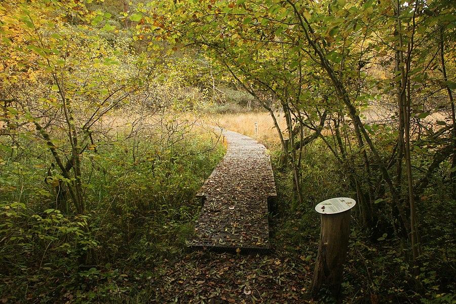 Sentier sur platelage dans la RNN de Chalmessin (Haute-Marne).