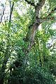 Radkersburg-Murufer 9109.JPG