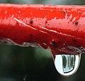 Raindrop (37361028).jpeg