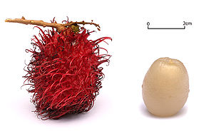 English: Rambutans on a white background.