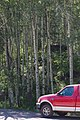 Red Ford F-150 (front half) in front of a forest (5883287075).jpg