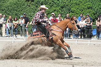 Rein - Reins are used to slow and direct the animal