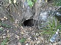 Remete-hegyi 8. sz. barlang2.jpg