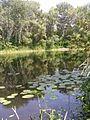 Repinsky Backwater. Don.JPG