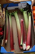 Rheum rhabarbarum im Gemüsegeschäft