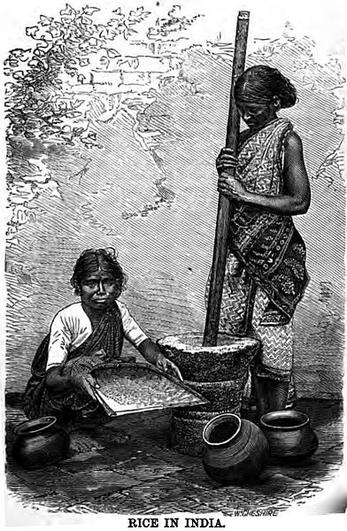 File:Rice in India (p.31, 1868).jpg