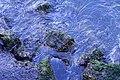 Ripples - Sausalito, CA - DSC03318.jpg