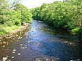 River Ayr upstream of Haugholm.JPG
