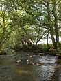 River Caldew - geograph.org.uk - 196321.jpg