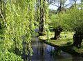 River Churn at Rendcomb - geograph.org.uk - 461855.jpg