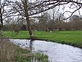 River Ebble, Stratford Tony - geograph.org.uk - 351315.jpg
