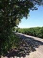 Road past Polstone Brake - geograph.org.uk - 1381378.jpg
