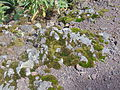 Rocas cubiertas por musgo.JPG
