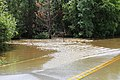 Roman Forest Flood, 4-19-16 at 2-30 PM (25926434153).jpg