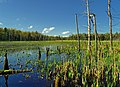 Rosecrans Bog Natural Area (Revisited) (4) (8733243119).jpg