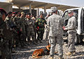 Rronnie's handler Michael Hile trains Iraqi soldiers in the use of military dogs.jpg