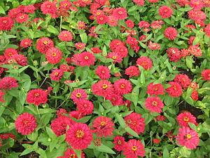 S2006 flowers 3