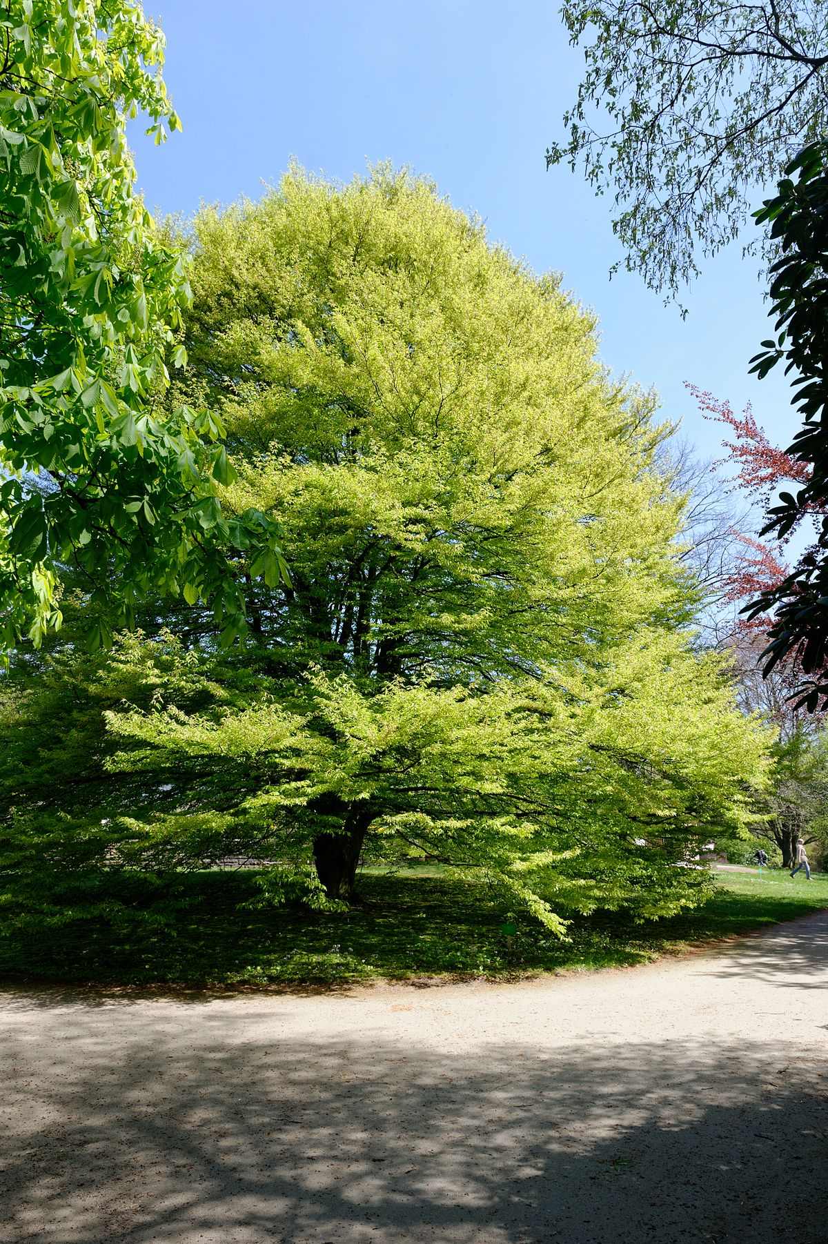 Botanischer Garten Italien Gardasee: Botanischer Garten Solingen