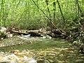 SWAS Meadow Spring Site Upstream view (32813384613).jpg