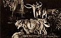 Sabre Tooth Tiger (NBY 415577).jpg