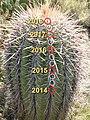 Saguaro Age.jpg