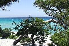 Saleccia plage DSCF4274.jpg