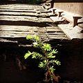 Salmonberry Trail (27163129580).jpg