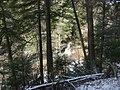 Salt Springs State Park (3283875837).jpg