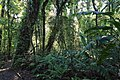 Santa Elena Reserve 02.jpg