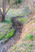 Schlangen - 2015-04-09 - LIP-058 Oesterholzer Bruch (32).jpg