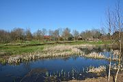 Schleswig-Holstein, Rantrum, Naturerlebnisraum NIK 4958.jpg
