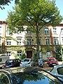 Schröderstiftweg 41 in Hamburg-Rotherbaum.jpg