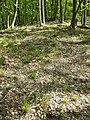 Schwarzwald südöstlich von Hollabrunn sl2.jpg