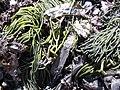 Seaweed colors.jpg