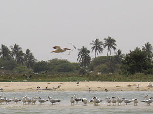 Langue de Barbarie - Birds flock on the beach at the Langue de Barbarie National Park, 2006.