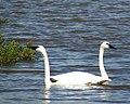 Seney National Wildlife Refuge - Wildlife (9705378646).jpg