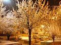 Shiraz - panoramio (7).jpg