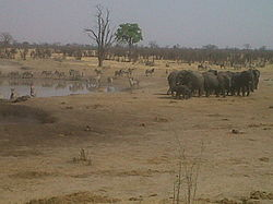 Hwange National Park Wikipedia